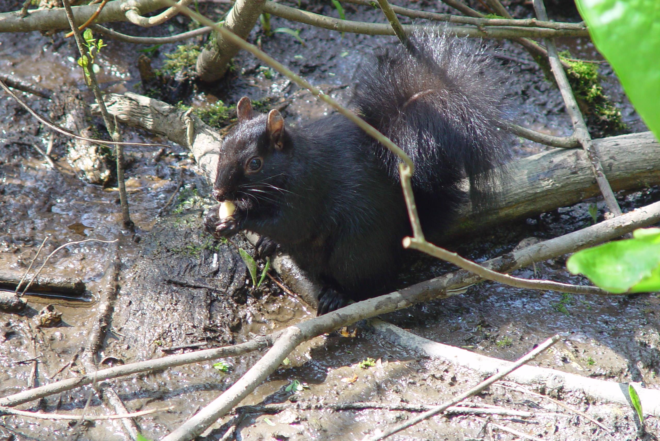 Beaver Lake6